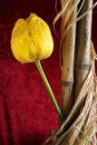 Тюльпан и тростники состава Стоковые Фото