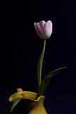 Тюльпан натюрморта в вазе Стоковая Фотография RF