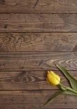 Тюльпан на древесине Стоковое Изображение