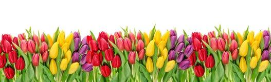 Тюльпан цветет знамя падений воды флористическое Стоковая Фотография RF