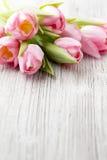 Тюльпан Стоковые Изображения RF