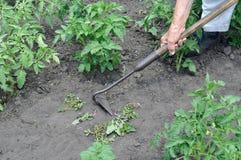Тяга садовника вверх по засорителям с сапкой Стоковое Изображение