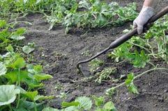 Тяга садовника вверх по засорителям с сапкой Стоковая Фотография