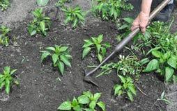 Тяга садовника вверх по засорителям с сапкой Стоковое Изображение RF