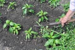 Тяга садовника вверх по засорителям с сапкой Стоковые Изображения