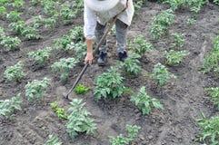 Тяга садовника вверх по засорителям с сапкой Стоковая Фотография RF
