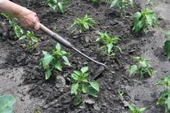 Тяга садовника вверх по засорителям с сапкой Стоковые Изображения RF