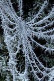 Тяжело замороженная паутина Стоковые Фото