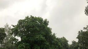 Тяжелый идти дождь, капание воды вниз, взгляд низкого угла видеоматериал