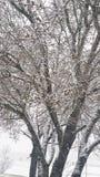 Тяжелый идти снег Стоковое фото RF