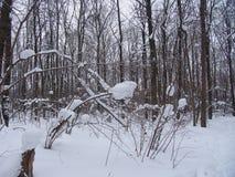 тяжелые снежности стоковые фотографии rf