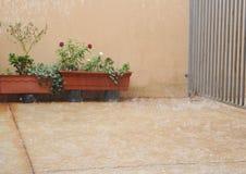 Тяжелый идти дождь на заводах Стоковое Изображение