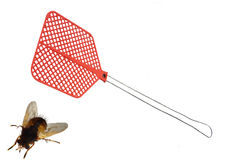 тяжёлый удар мухы Стоковая Фотография RF