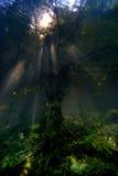 тёмные воды Стоковая Фотография
