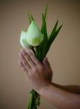 Уважение оплаты для извиняется в тайском стиле Стоковая Фотография