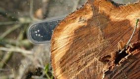 Увидел цепную пилу дерева Деревянные обломоки падают от пилы акции видеоматериалы