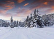 Увлекая восход солнца зимы в прикарпатских горах с cov снега Стоковое Фото