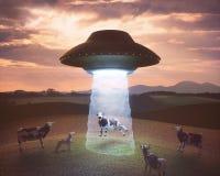 Увоз чужеземца на ферме Стоковое Фото
