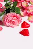 уволенная разбросанная роза лепестков Стоковая Фотография RF