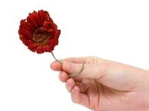 увяданный цветок Стоковое Изображение
