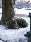 Увяданная рождественская елка Стоковое фото RF