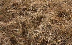 увяданная трава Естественная предпосылка Стоковая Фотография