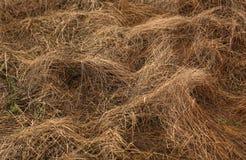увяданная трава Стоковые Фотографии RF