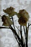 увяданные цветки Стоковое Изображение RF