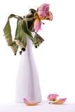 Увяданный цветок в вазе Стоковые Изображения RF