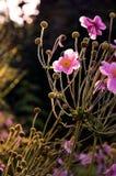 Увядая цветене Стоковое фото RF