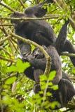 Уганда Стоковое Изображение RF