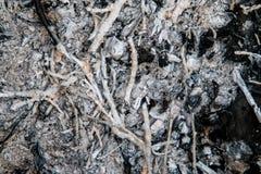 Угли и золы от ветвей Стоковые Изображения