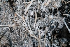 Угли и золы от ветвей Стоковое фото RF
