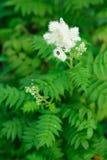 угловойой сад Стоковые Фото