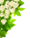 угловые цветки обрамляют вертикальную белизну Стоковые Изображения RF