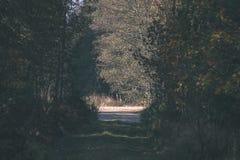 угождать дороге гравия страны чувств или разума астетически в цветах осени в цветах падения с туманом и туманными деревьями на об стоковые изображения