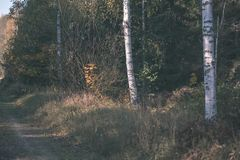 угождать дороге гравия страны чувств или разума астетически в цветах осени в цветах падения с туманом и туманными деревьями на об стоковые изображения rf