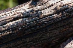 Уголь на, который сгорели журнале стоковое изображение rf