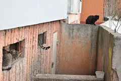 Угол кота в городе зимы стоковые фотографии rf