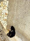 угол медведя Стоковое фото RF