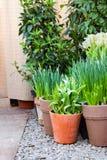 Угол сада с баками полными зеленых растений и цветков цветков на камешке, вертикали стоковые изображения
