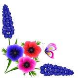 Угол с гиацинтами muscarinic голубых виноградин и ветрениц с бабочкой на белой предпосылке бесплатная иллюстрация