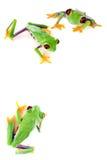 угол eyed красный цвет лягушки стоковые изображения rf