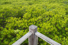 Угол дорожки деревянного моста в лесе мангровы Стоковая Фотография RF