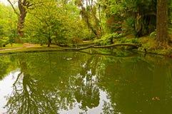 Угол сада с отражением заводов в воде Стоковые Изображения RF