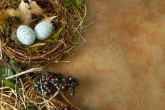 Угол с гнездом и яичками Стоковое Фото