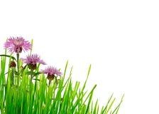Угол цветков зеленой травы и thistle Стоковое фото RF