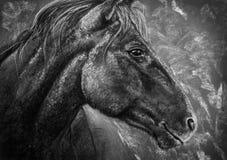 Уголь портрета лошади Стоковые Фото