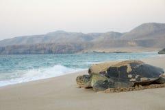 Угрожаемая зеленая задняя черепаха стоковое изображение rf