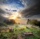 Угрожаемый лес Стоковые Изображения RF